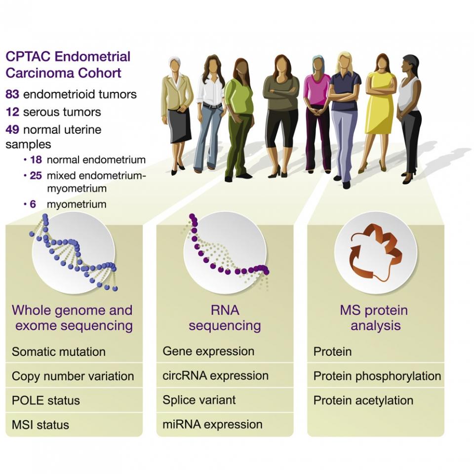 자궁내막암 원인 단백질 규명됐다