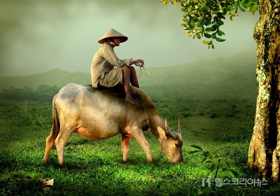 [사진=헬스코리아뉴스 D/B]    Vietnam